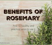 Thumb_benefits-of-rosemary-660x480