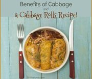 Thumb_cabbage-rolls-recipe-benefits-660x595