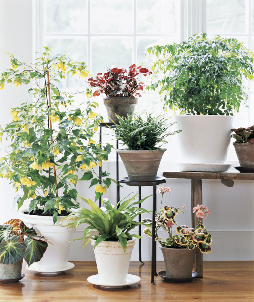 How to choose a plant for every room in your house - Indoor potted flowers ...