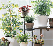 Thumb_indoor-potted-house-plants