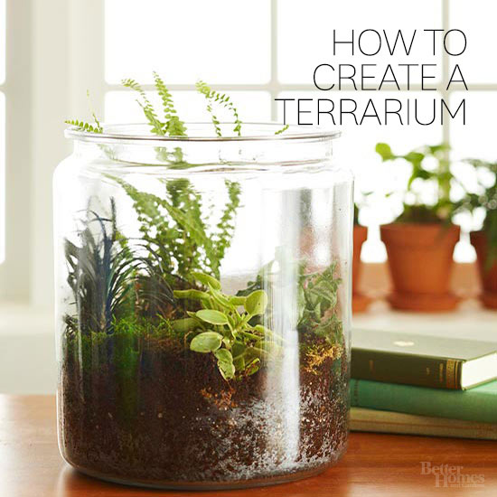 How-to-terrarium.jpg.rendition.largest