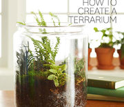 Thumb_how-to-terrarium.jpg.rendition.largest