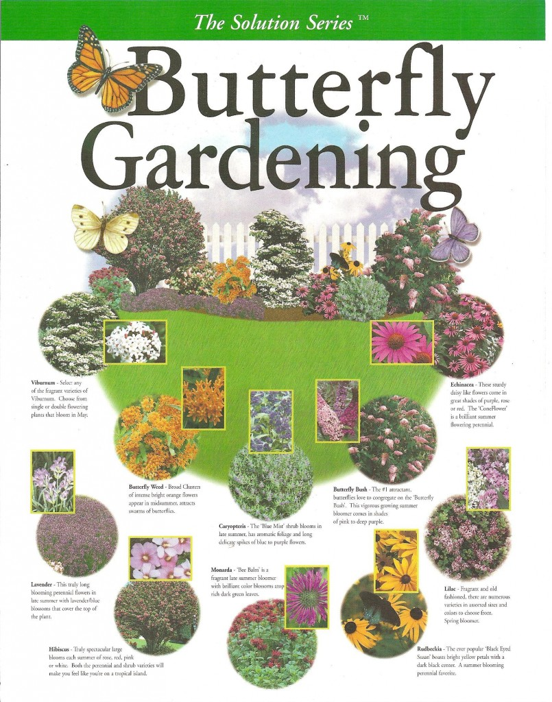 Create your own butterfly garden for Create a garden plan