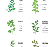 Thumb_new-ways-to-pair-herbs1