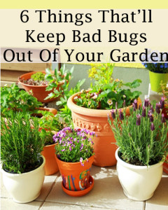 6-things-thatll-keep-bad-bugs-out-of-your-garden-240x300