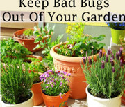 Thumb_6-things-thatll-keep-bad-bugs-out-of-your-garden-240x300