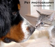 Thumb_pet-photography-blog-pic-1024x682