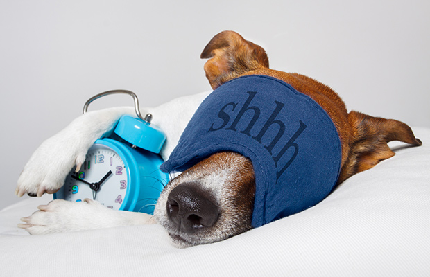 Sleeping-dog-morning-person_2
