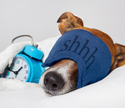 Thumb_sleeping-dog-morning-person_2