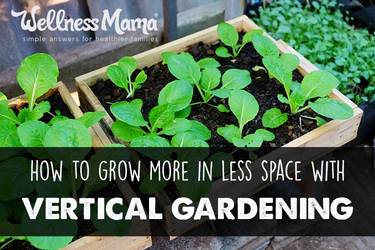 How-to-grow-more-in-less-space-with-vertical-gardening
