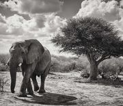 Thumb_south-africa-elephant-scene_95357_990x742