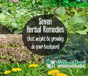 Thumb_7-herbal-remedies-that-might-be-growing-in-your-backyard-right-now